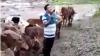 తెలంగాణలో మహారాష్ట్ర ఎస్సై రచ్చ.. గన్నుతో హల్చల్.. చివరకు..! (వీడియో)