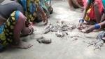 ఎలుకలను తింటున్న బీహార్ వరద బాధితులు...! ప్రభుత్వ ఏర్పాట్లపై మండిపాటు