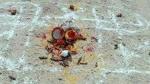 ముగ్గురిని హతమార్చి రక్తం శివలింగంపై చల్లి  .. గుప్తనిధుల వేటలో నరబలులు ?