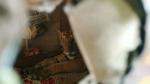 ఇంట్లో, బెడ్పై ప్రత్యక్షమైన రాయల్ బెంగాల్ టైగర్...! ఖాజిరంగా జూ పార్క్ దుస్థితి