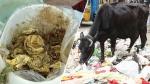 ఇంతకీ ఏముంది: కడుపునొప్పితో  గోవు...సర్జరీ చేసిన వైద్యులు అవాక్కయ్యారు