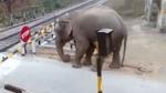 వీడియో వైరల్: రైల్వే గేట్ తొండంతో ఎంత సున్నితంగా ఈ ఏనుగు ఎత్తిందో చూడండి..!