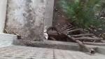 Leopard in home?: నివాసంలో దూరిన జంతువు, స్థానికుల గుండె గుబేల్, బయటకు రావొద్దు: పోలీసులు