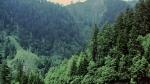 బాబోయ్: దట్టమైన అడవిలో మిస్ అయిన నాలుగేళ్ల చిన్నారి..అడవి జంతువుల మధ్యే 56 గంటలు..!