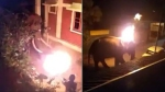మనుషులేనా?: ఏనుగుపైకి మండుతున్న టైరు విసిరి ప్రాణం తీశారువీడియో