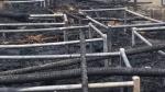 ఢిల్లీ సరిహద్దుల్లో కలకలం- రైతుల టెంట్లకు నిప్పు- పలు అనుమానాలు