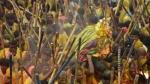 దేవరగట్టు కర్రల సమరం -పగిలిన తలలు : వంద మందికి గాయాలు- నలుగురు విషమంగా..!!