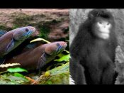 నడిచే చేప, తుమ్మే కోతి: హిమాలయాల్లో కొత్తజాతులు