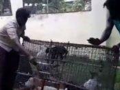 చెన్నైలో 'క్యాట్ బిర్యాని' దందా : గుట్టురట్టు చేసిన పోలీసులు (వీడియో)