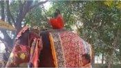ఏనుగుపై ఆసనం వేస్తూ పడిపోయిన రాం దేవ్ బాబా.. సోషల్ మీడియాలో వీడియో వైరల్..