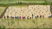 అన్నదాతలకు కేంద్రం మరో షాక్- ఇక పరిశ్రమలే నేరుగా రైతుల భూములు కొనే ప్రతిపాదన