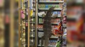 viral video: గాడ్జిల్లా అనుకొని గజ్జున వణికారు -సూపర్ మార్కెట్లో భారీ బల్లి కలకలం
