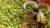 జగిత్యాలలో మామిడి మార్కెట్.. కొల్హాపూర్ మార్కెట్కు మరిన్ని వసతులు: నిరంజన్ రెడ్డి