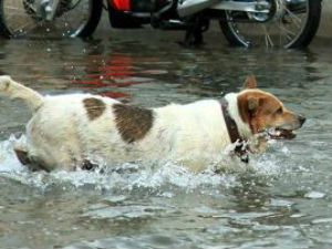 Bombay HC upholds conviction based on dog's evidence