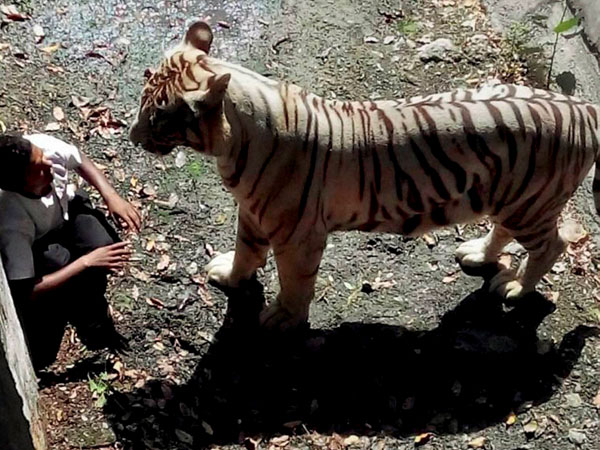 Delhi Zoo gets clean chit, report says 'tiger-obsessed' youth was killed due to his 'misadventure'