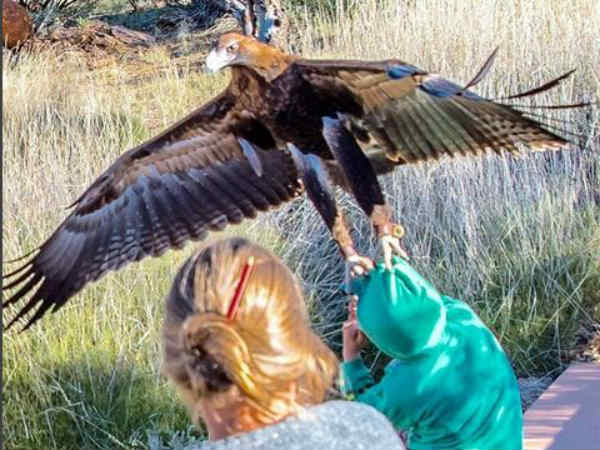 Angry bird: Eagle attacks young boy during a bird show in Australia