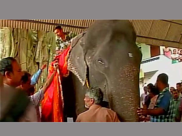 This 86-year-old elephant in Kerala could soon enter the Guinness Records
