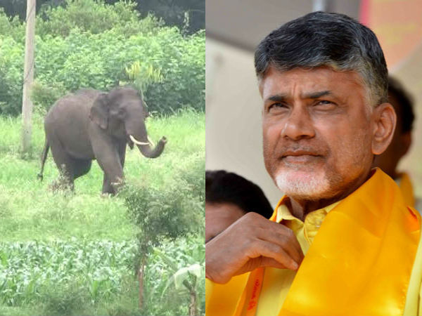 Kuppam People Afraid Elephants