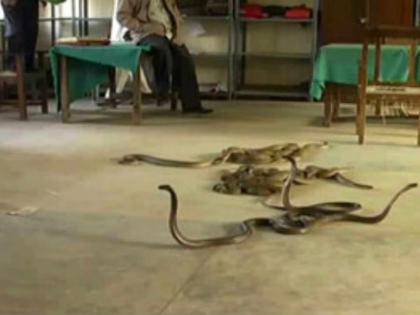 fear of snakes in excise office