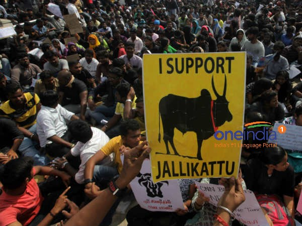Tamil Nadu Jallikattu violence: Retired judge to head probe team