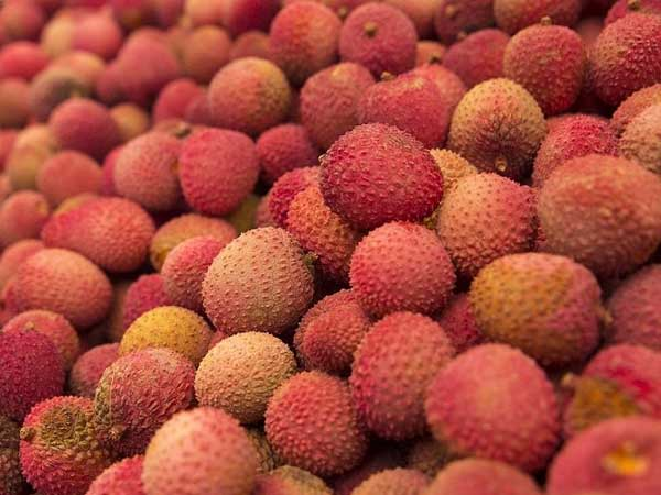 Love litchis? Toxins in the fruit to blame for thousands of child deaths in Bihar