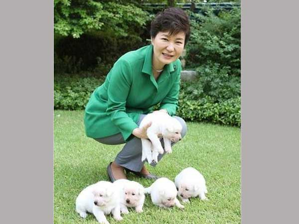 Outrage after ousted South Korea leader leaves dogs at presidential palace