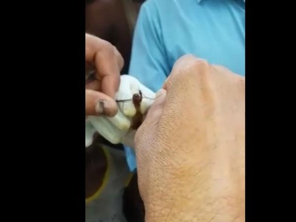 మహిళల జుట్టు కత్తిరింపు మిస్టరీ వీడింది?: ఈ పురుగే(వీడియో)