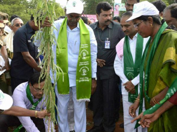 Cm Kcr Sapling Tree Goes Dry Karimnagar