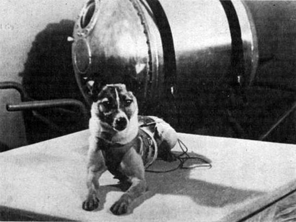 Years Laika The Dog S Journey Into Space