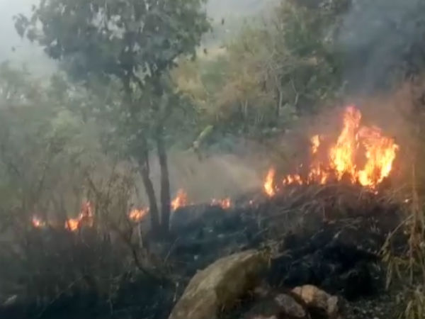 Tamil Nadu forest fire: Tourist guide arrested on Tuesday