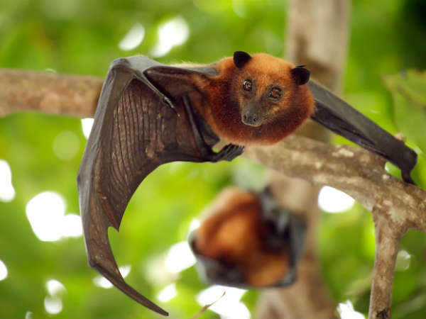 The Indian Homeopathic Medical Associations Kerala unit has claimed to have the medicines to treat Nipah virus.