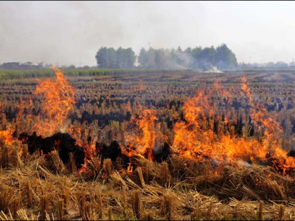 Crop burning in the North is spreading pollution not just to Delhi but even India's South