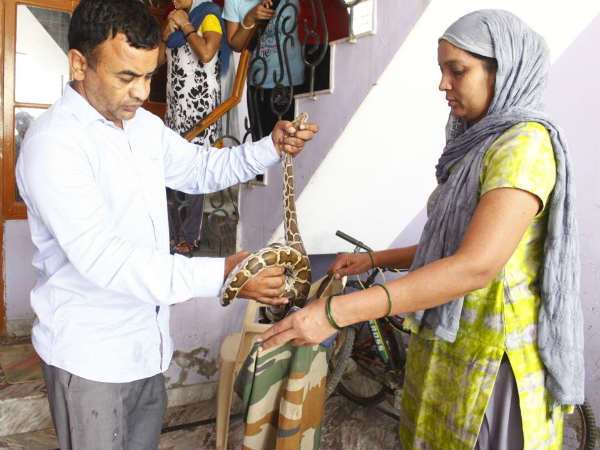 Shocking: Gurugram woman finds five-foot-long python in her kitchen