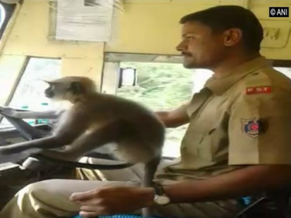 Karnataka bus driver suspended for making a monkey drive the bus