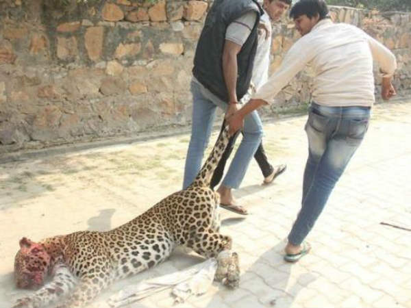 A leopard was killed by villagers in Assam.