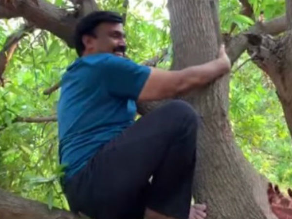 Gali Janardhan Reddys video in which he is climbing mango tree becomes viral on social media
