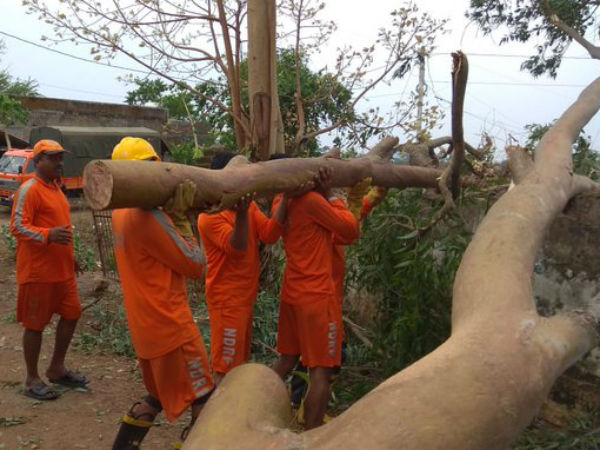 NDRF started rehabilitation works in Fani Cyclone affected areas in Andhra and Odisha