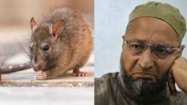 Country faces real danger from 'rats', not Muslims: Asad Owaisi