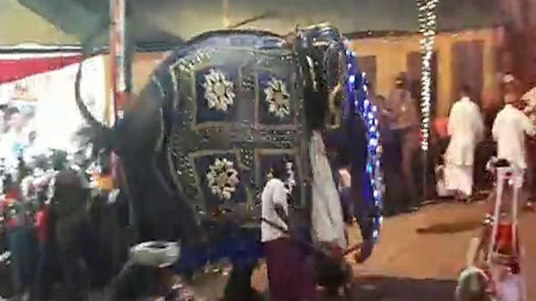 Elephants Out Of Control At Religious Festival, 17 Injured
