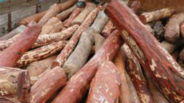 Police firing on red sandalwood smugglers near hoskote in bangalore outskirts