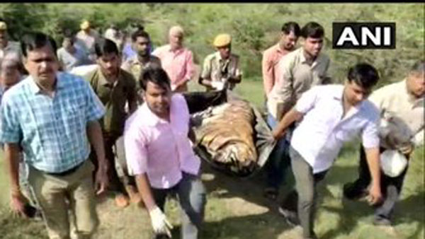 Last rites of a tiger Veeru performed by wildlife staff at Aama ghat in Sawai Madhopur