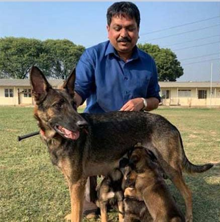 Kerala Police department to induct Belgian Malinois, dog breed involved in most wanted terrorist Baghdadi raid