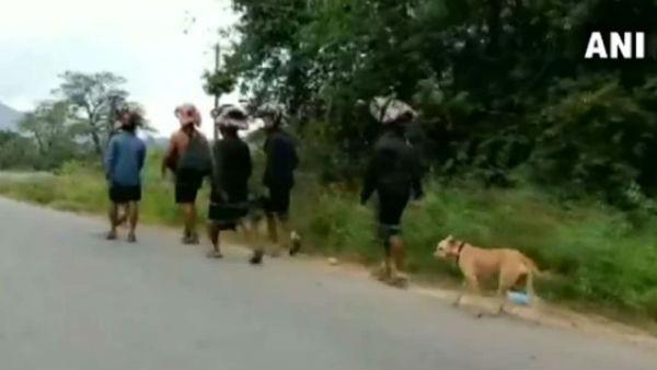 శబరిమల దర్శనానికి భక్త శునకం: 480 కి.మీలు నడిచి భగవంతుడి సన్నిధికి