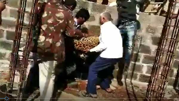 A Leopard enter into a residence in Shadnagar of Telangana