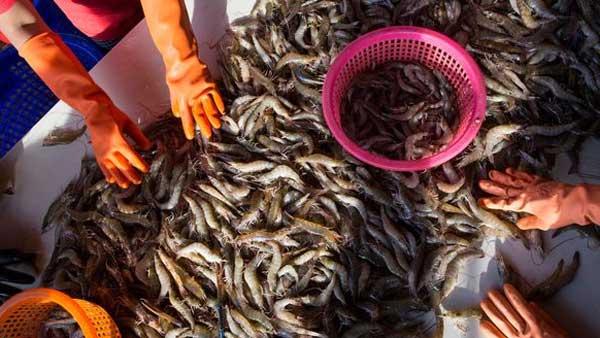 భయానక కరోనా వైరస్ బారిన పడిన ఫస్ట్ పేషెంట్ ఎవరో తెలుసా?: వుహాన్ ఫిష్ మార్కెట్..రొయ్యల వ్యాపారి..! | 57-year-old Women in China's Wuhan market shrimp seller may be Covid-19 patient zero: Report