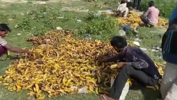 Migrants Pick Bananas Trashed Near Delhi Cremation Ground