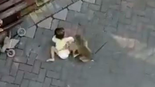 Monkey running along with a toddler lets go after being a man intervention