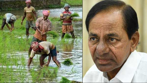 Kcr Comprehensive And Controlled Agriculture Policy To Benefit Telangana Farmers