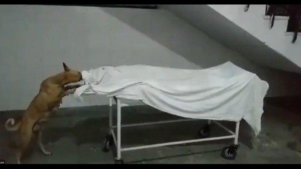 Shock: ఆసుపత్రిలో బాలిక శవం కొరికి తినేసిన కుక్క, సింపుల్ గా విచారణకు ఆదేశం, వీడియో వైరల్ !