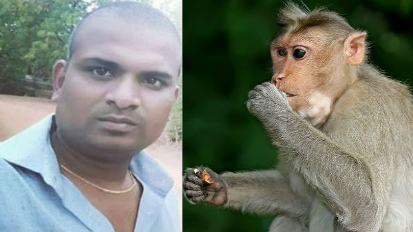 A software engineer dies after tries to went out monkey from his house in Hyderabad
